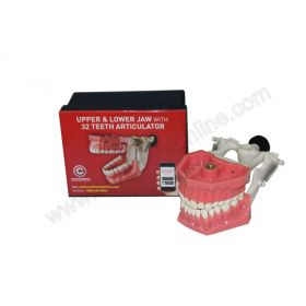 Confident Jaw Set with 32 Teeth and Articulator
